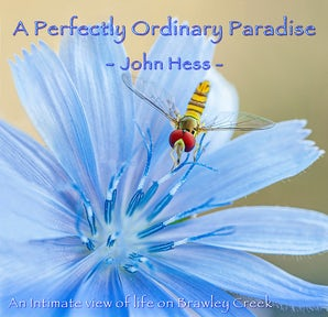 A Perfectly Ordinary Paradise